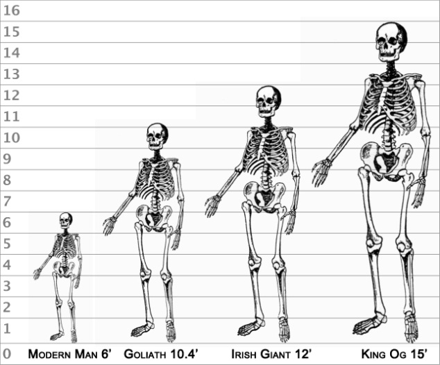 Comparison of Giants Part Ten: Modern Discoveries of Giants